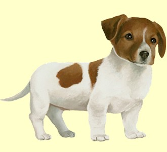Take in a jack russell breed dog