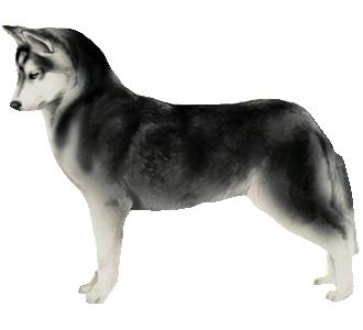 https://data.dogzer.net/image/36-dog-breeds-siberian-huskies/51-coat-black/2-dog--2.png