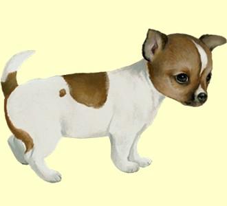 Take in a chihuahua breed dog